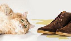удаление запаха мочи из обуви
