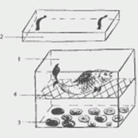 Ответить.  Как сделать коптильню холодного копчения своими руками по схеме.